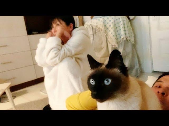 【しゃべる猫】最前列で飼い主の上に乗り夢中で映画鑑賞をする猫【しおちゃん】