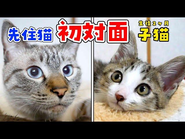 えっ!?子猫と先住猫の初対面が、飼い主の油断した隙に行われていました…!
