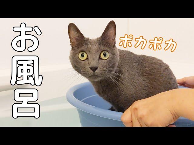 お風呂で久々に大好きな桶猫をする猫