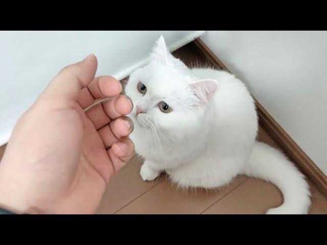 仕事に行こうとすると猫がついてこようとして困っています。