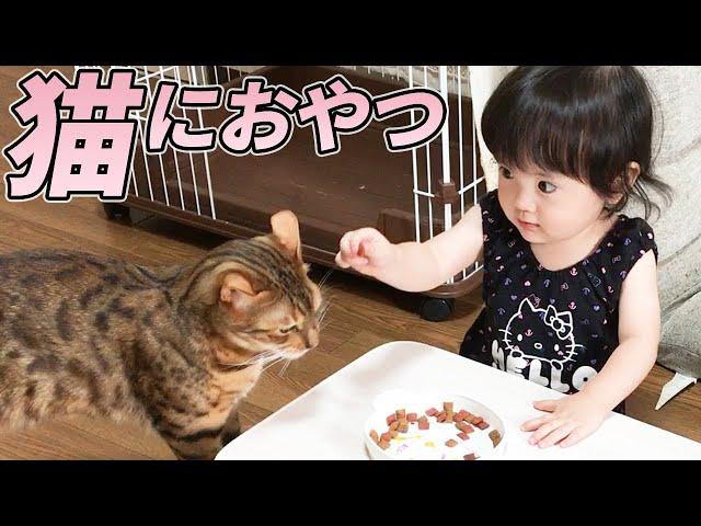 年上の子守り猫におやつを与える1歳娘