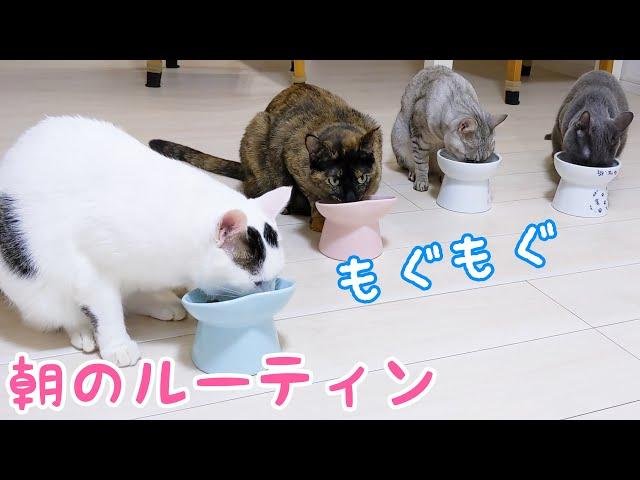 ママが朝起きてからの猫4匹はこんな感じです…!