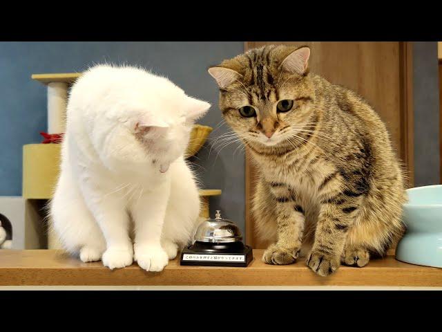 うちの猫たちはベルを鳴らすと必ず飛んできます!