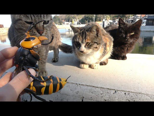 島の猫にオオスズメバチを近付けると…