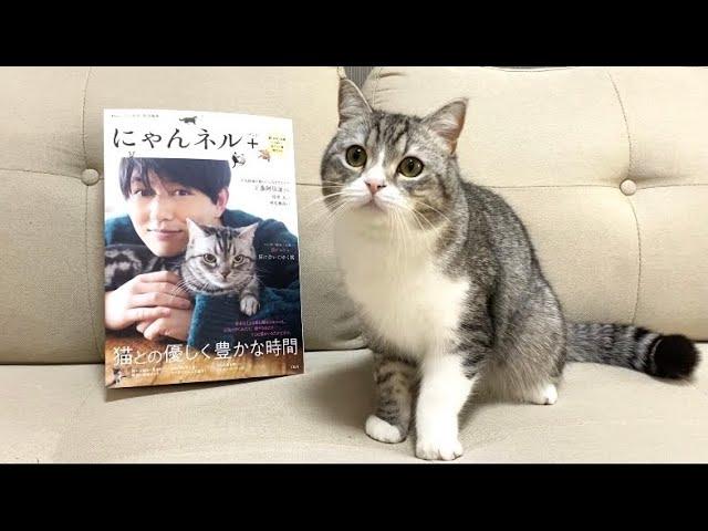 【祝】ついに雑誌デビューを果たした猫がこちらです!