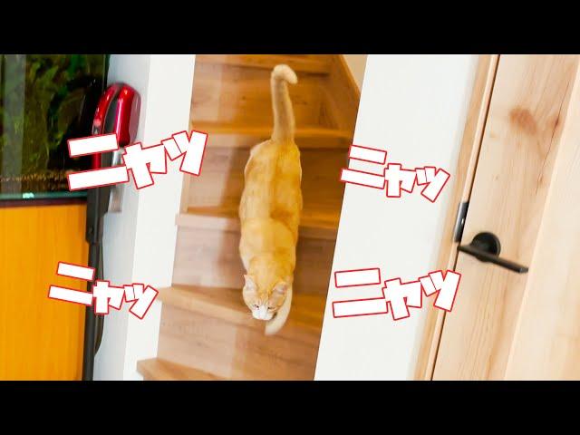 飼い主に呼ばれて全速力で階段を降りてくる猫