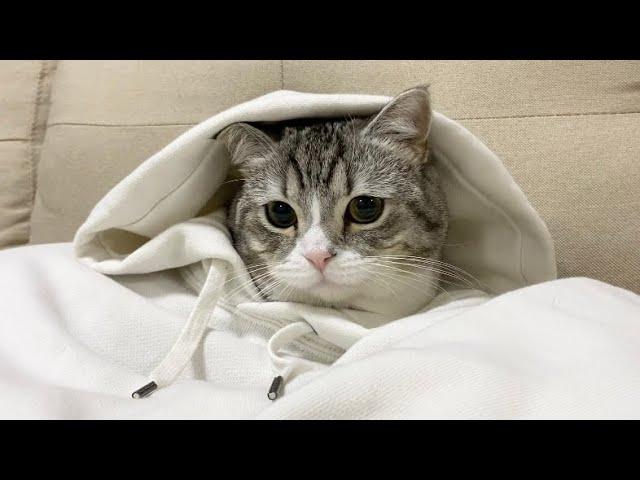 脱ぎ捨てたパーカーの中に猫が住んでいましたw