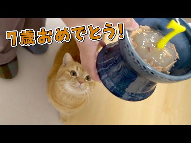 【祝7歳】手作りケーキで愛猫の誕生日をお祝いしました!