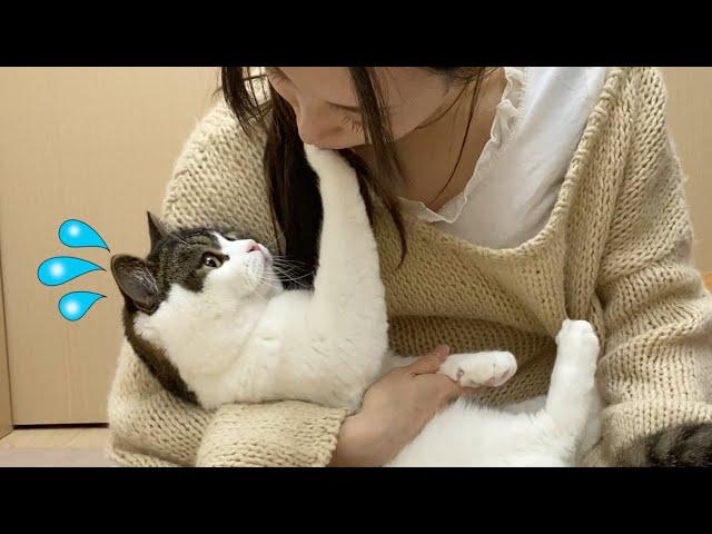 ママを止めたい親子猫の行動が可愛すぎたw