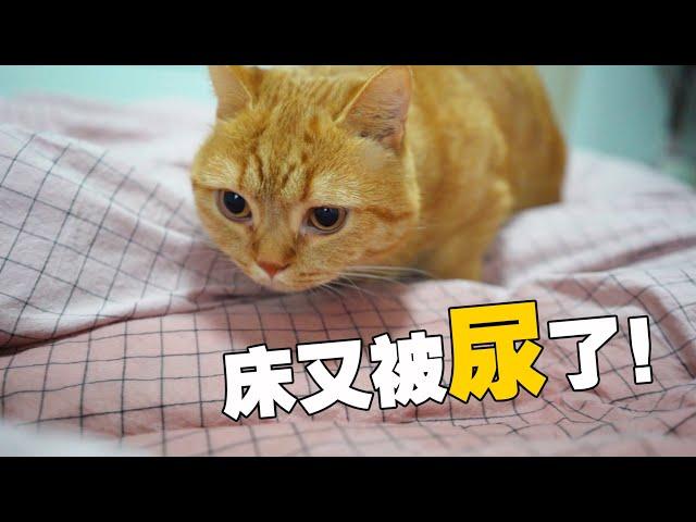 """【喵来啦】主人""""尿床""""甩锅给猫咪?猫:有苦说不出!"""