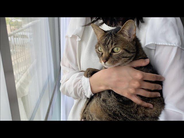 嫁に抱っこされて外を見ている凶暴猫に触った結果...