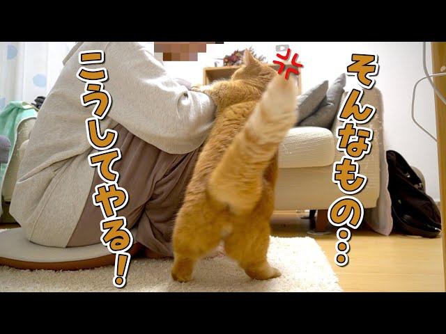 【悲報】いつも優しい愛猫があることをしていたら豹変しました!