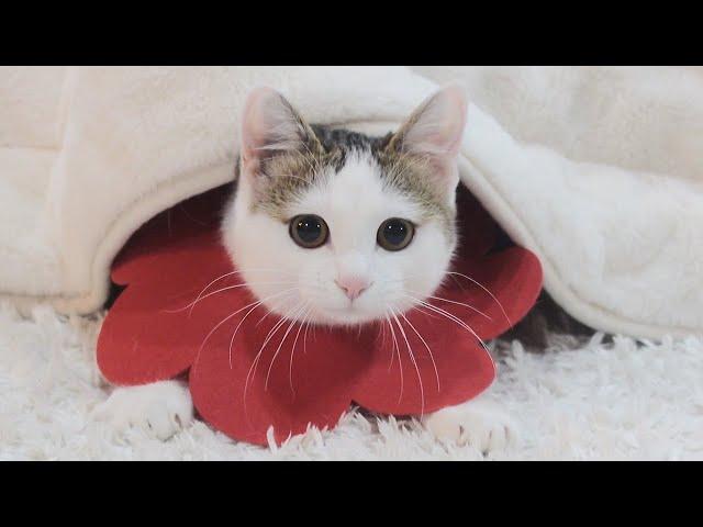 潜んで遊ぶねこ。-Cats like to hide and play.-