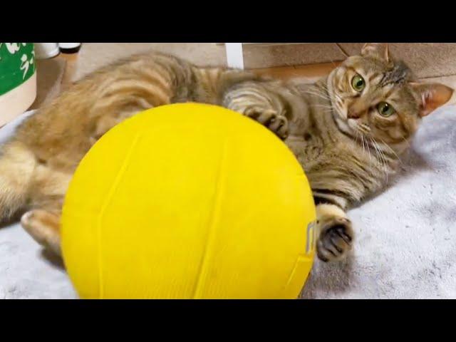 どんどん手を抜いていく麦わら猫リタ♥