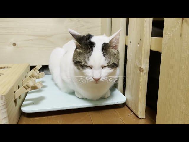 慣れないお父さんに待ちくたびれる猫