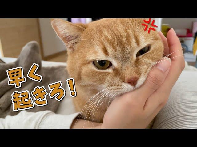 なかなか起きない飼い主に強行手段に出た猫がかわいい!笑