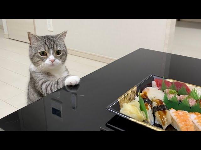 お寿司を頼んだらちょっと欲しそうに見つめてくる猫がかわいすぎた笑