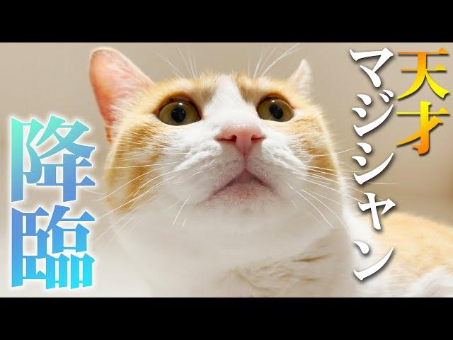 猫たちが驚きのイリュージョンを披露してくれました