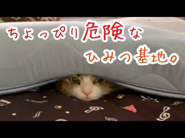 危険なので体の一部分出しといてください…。【猫の隠れ家】vol.257