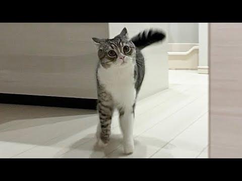 突然暗闇から本気で襲いかかってくる猫が怖すぎたw