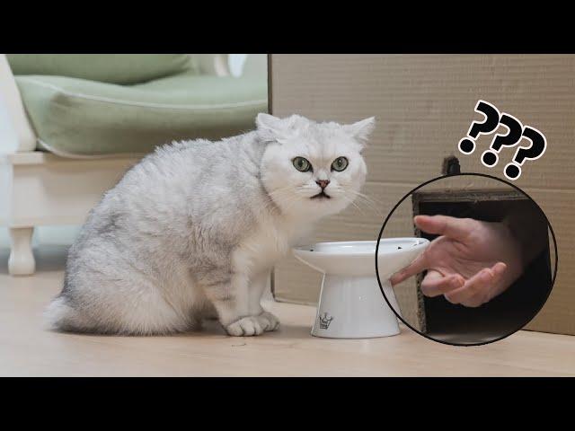 在猫咪干饭时偷走食物!猫:变成空气?丨花花与三猫