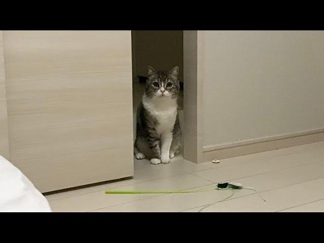 深夜2時に遊びたくて駄々こねてくる猫がこちらです…笑
