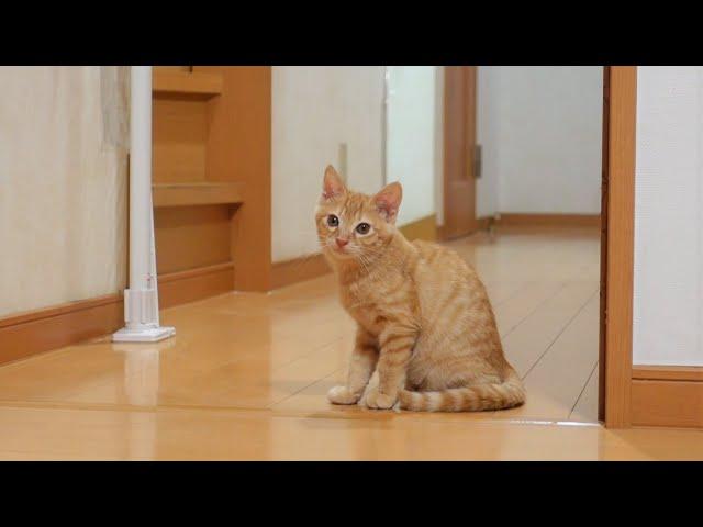 大好きな姉猫の帰りを健気に待つ子猫
