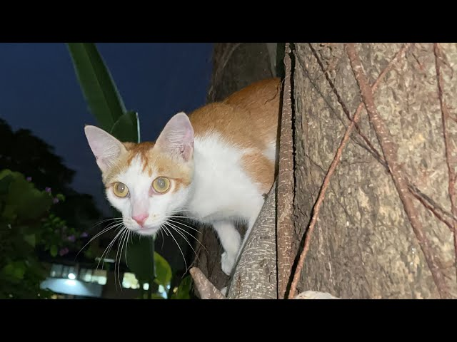流浪猫太调皮啦,居然躲在树上突然伸出头,我被吓了一跳