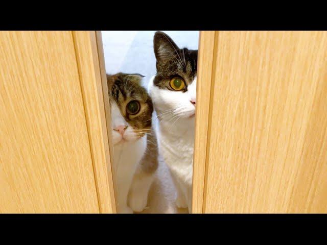 留守番中の親子猫を撮影してみたら寂しがり屋で可愛かったw