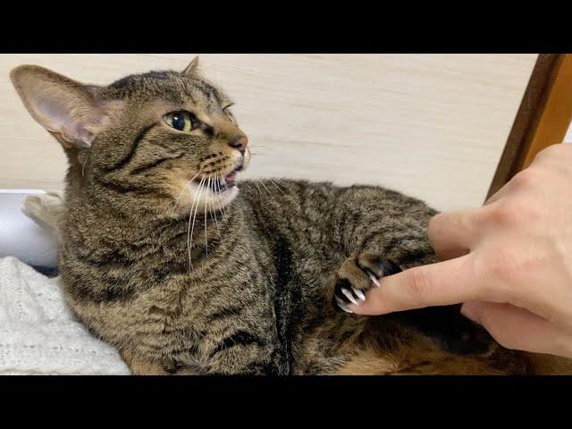 触ろうとすると足でガードする凶暴猫がこちら...