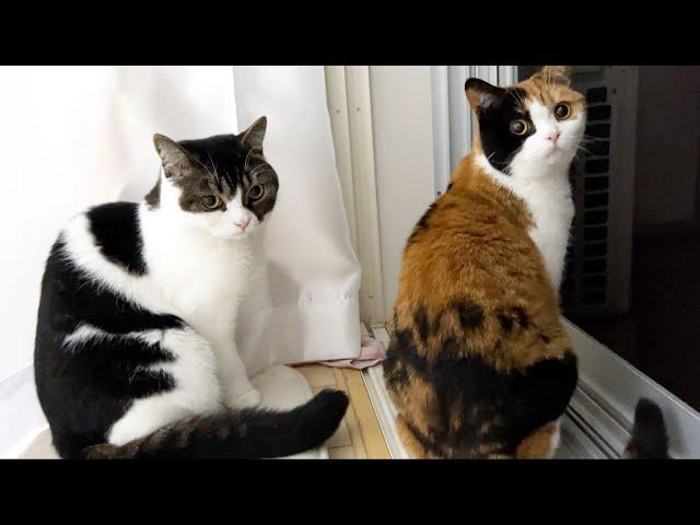 🐈ママ猫と再会した息子猫!